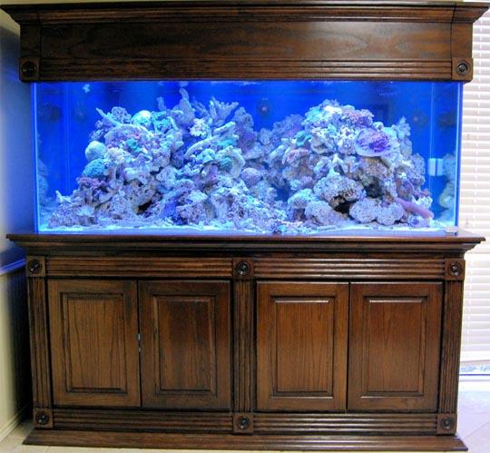 Muebles para acuario hd 1080p 4k foto for Mueble acuario